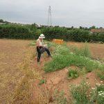 surveying-an-arable-margin-north-petherton-rfg